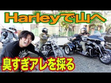 Harley-Davidsonで超絶臭いアレを拾いに行く!!【モトブログ】